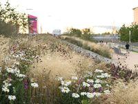 Tuinman&Co / Natuurlijke tuinen