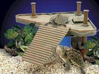 ... Turtle tank ideas on Pinterest Small turtles, Aquatic turtles and
