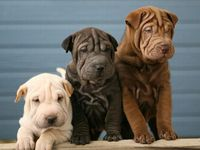 Awww! Doggy!!!