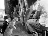 People & animal friendships.