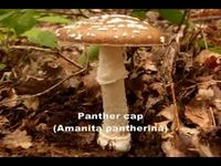 Mushroom Grows Keep Getting Contaminated Try This Instead