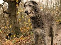 Perros Razas on Pinterest | Pastor, Terriers and Corgis