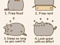 CATS <33333