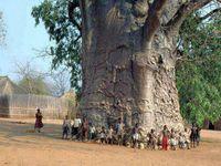 Marvelous Old Trees
