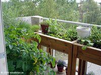 173 Best Urban Garden | Balcony images | Garden, Balcony ...