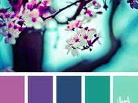 Pantone & Color Palettes