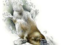Australian  watercolour animals