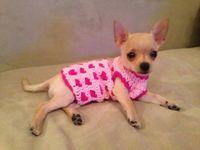 Crochet perritos