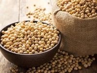 Pin By افادة On فوائد فول الصويا للتسمين الارداف Soy Protein Healthy Beans Soy Protein Isolate
