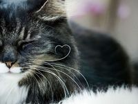 I love cats and other animals