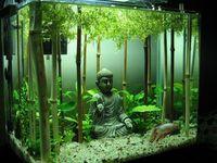 500 Aquarium Ideen Ideas In 2020 Aquarium Design Aquarium Fish Tank