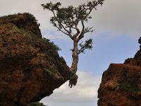 Tree Houses &Tree Treats