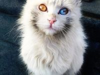 Cat and Kittens Pictures & Images / Cat and Kittens Pictures & Images of C4Cats