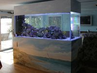 1000 images about room divider ideas on pinterest cats for Fish tank divider 75 gallon