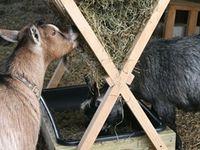Farm + Homestead