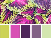 Colour Inspirations