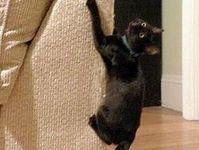 Cat!  Board