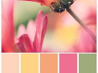 Paletes de cores