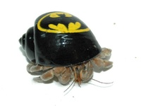 Hermit Crabs Crafts