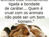 AMOR POR ANIMAIS  / cachorro , gato, aves e muitos outros mais !!!
