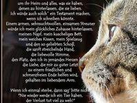 Katze tröstende gestorben worte hund_gestorben_tröstende_worte —