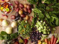 Nutrition & Registered Dietitians