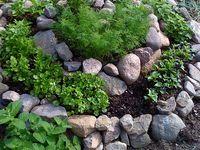 Gardening & Outdoor Ideas
