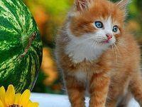 صور خلفيات رمزيات قطه قطط كيوت رسم Cat Painting Cat Art Global Gallery