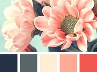 12 Best Color Palette Images On Pinterest In 2018