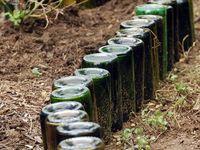 Garden Ideas, Outdoor Plants and Indoor Green Beauties
