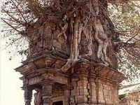 Tree Houses