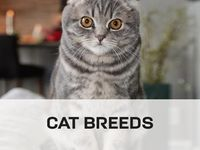 Kittens Of This Unusual And Distinctive Breed Are Actually Born