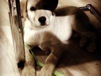 My boy... ~eLviS~