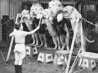 Vintage: Circus