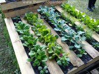 Piha ja puutarha