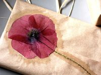 Fleurs de secco / Dried flowers