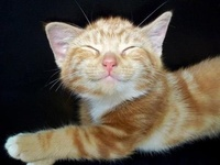 Cats Are Funny...and beautiful too!