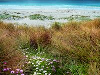 Beaches WA