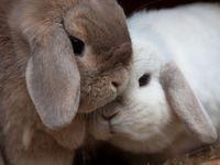 Bunny Revolution