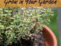 Plants/Garden/Herbs
