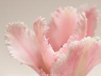 07.Sugar flower inspiration