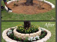 Garden/Yard ideas