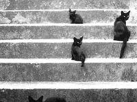 BLACK CATS LOVE ME