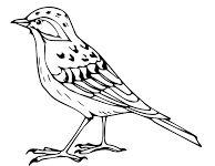 90 Best skowronek ideas | skowronek, ptaki, szablony
