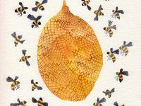 Bee's BEE's BEE'S! Love'Em!