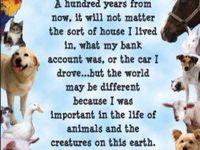 Veterinary Love ❤