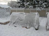 Winter Garden from High Mowing Organic Garden Seeds
