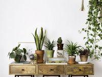 Furniture + Home Accessories