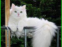 70 Best Kucing Comel Images Kucing Haiwan Kucing Parsi
