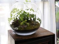 Fairy Gardens and Terrariums
